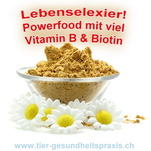 Powerfood - hochdosiertes Vitamin B-Komplex & Biotin